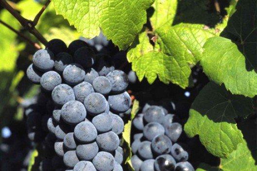 Vignoble de Gaillac, route des vins