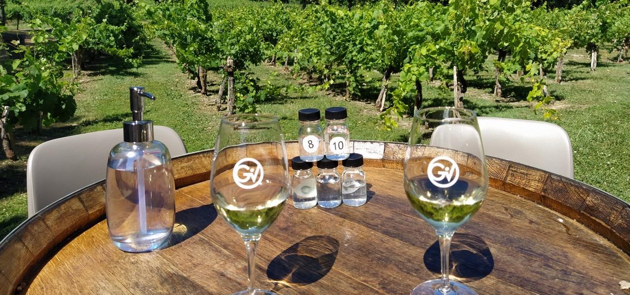 degustation vins de gaillac decouverte oenologie
