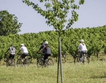 cycling in the middle of the vineyard south france