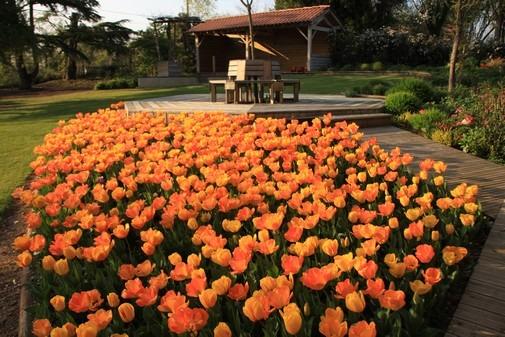 jardin-des-martels-tulipes-6