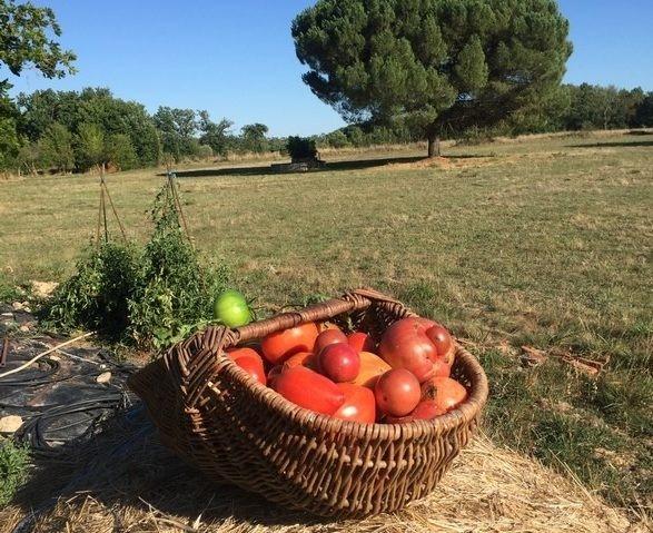 tomates-1-e1605894170573_587x479_acf_cropped