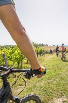 vélo dans le vignoble de Gaillac, image CDT Tarn
